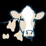 Dairy Formulations